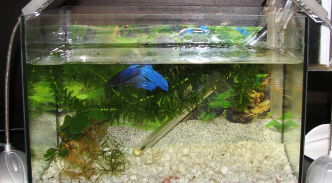 Sumovo akvárium Betiny